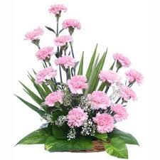15 pink carnation basket